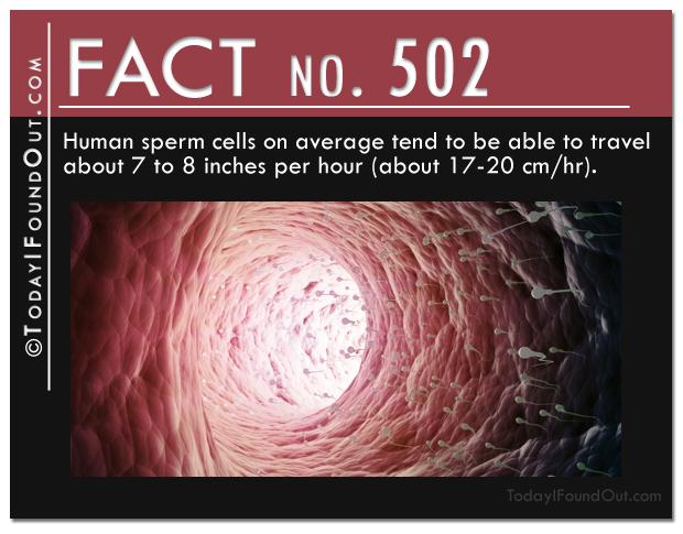 sperm-fact