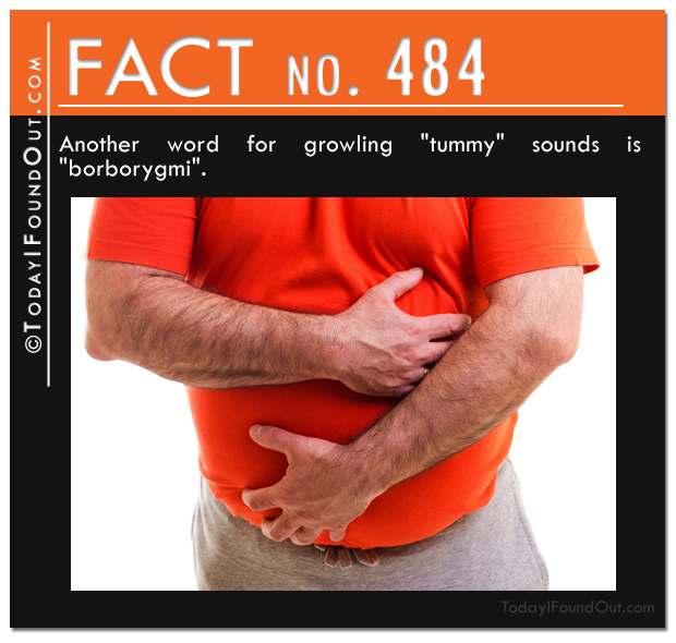 tummy-fact