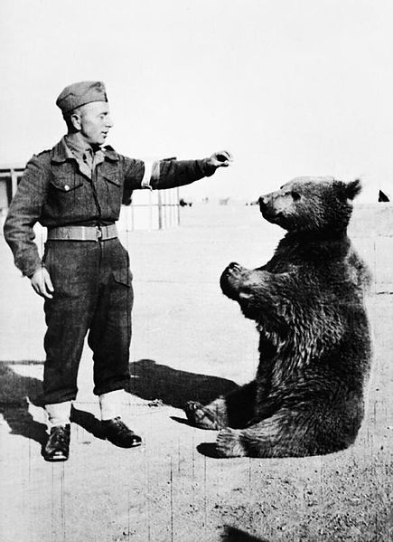 The Bear Who was Officially a Member of the Polish Army During WWII