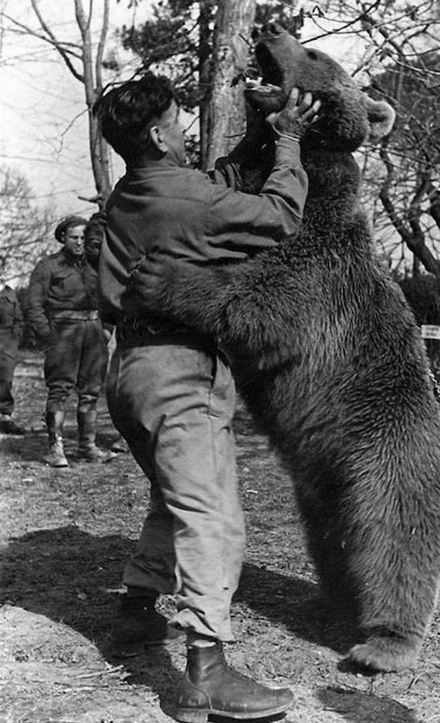 The Bear Who was Officially a Member of the Polish Army