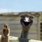 Happy_Ostrich_is_Happy-e1264421537422