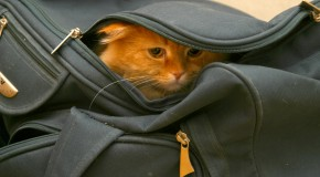 "Where Did the Expression ""Let the Cat Out of the Bag"" Come From?"