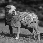 Sergeant-Stubby