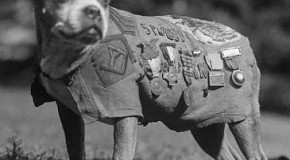 Sergeant Stubby: The Most Decorated Dog of WWI