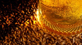 What Exactly is Malt?