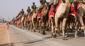 The U.S. Army's Camel Corps