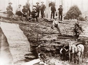 jumping-lumberjacks