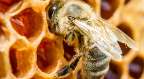 "The Origin of the Phrase ""Mind Your Own Beeswax"""