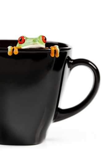 frog-cup