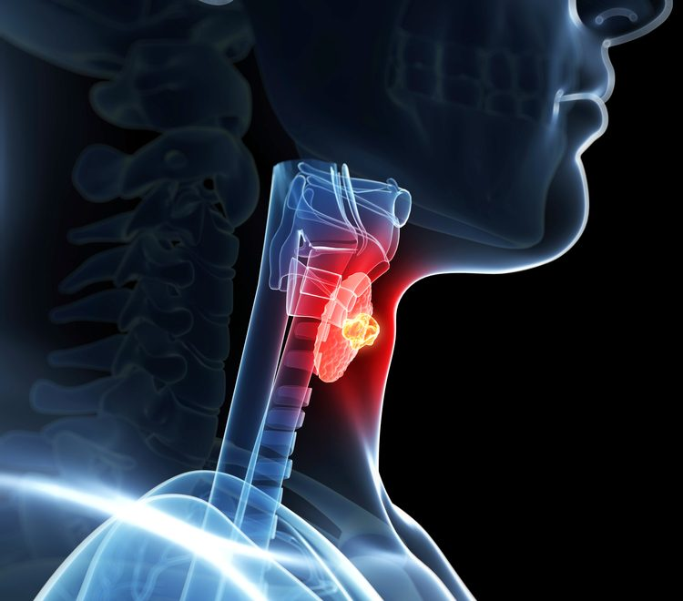 What Is Stem Exactly: Why So Many Health Issues Stem From Problems In The Thyroid