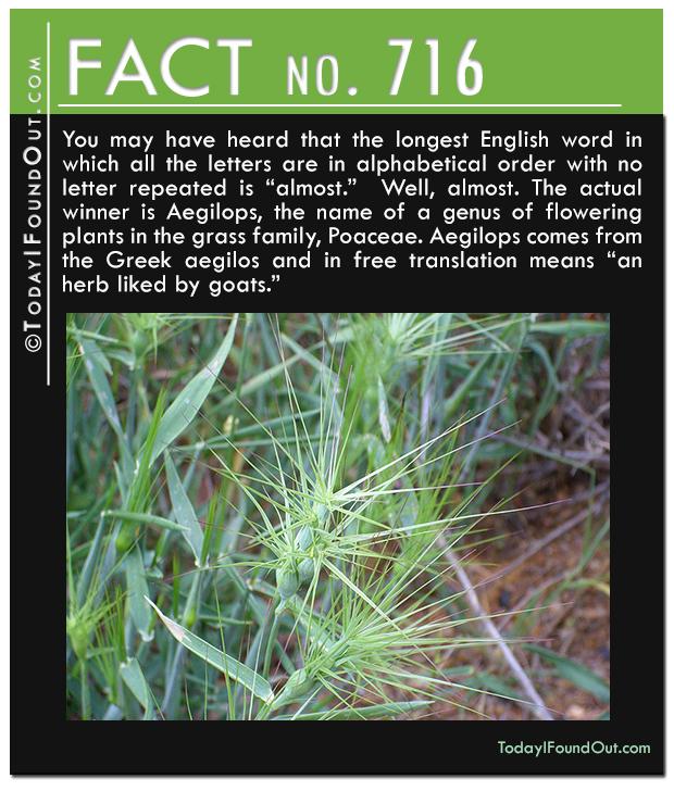 TIFO-Quick-Fact-716