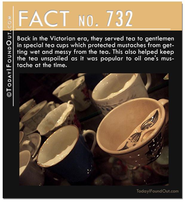 TIFO-Quick-Fact-732