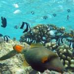 fish-e1315434652998