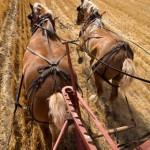 horses2-340x512