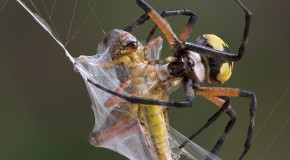Spiders and Webs – Why Don't They Get Stuck?