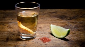 Who Invented Tequila and What about the Worm?