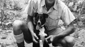 Five War Heroes Who Also Happened to Be Dogs
