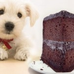 dog-eating-chocolate-e1297770445260