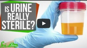 The Truth About Whether Urine is Sterile