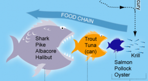 Why is Mercury in Fish Such a Problem Today?