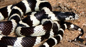 Why Don't Snakes Get Sunburned?