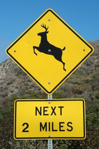deer-crossing