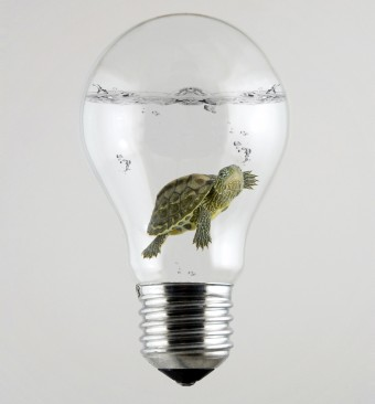 turtle-light-bulb