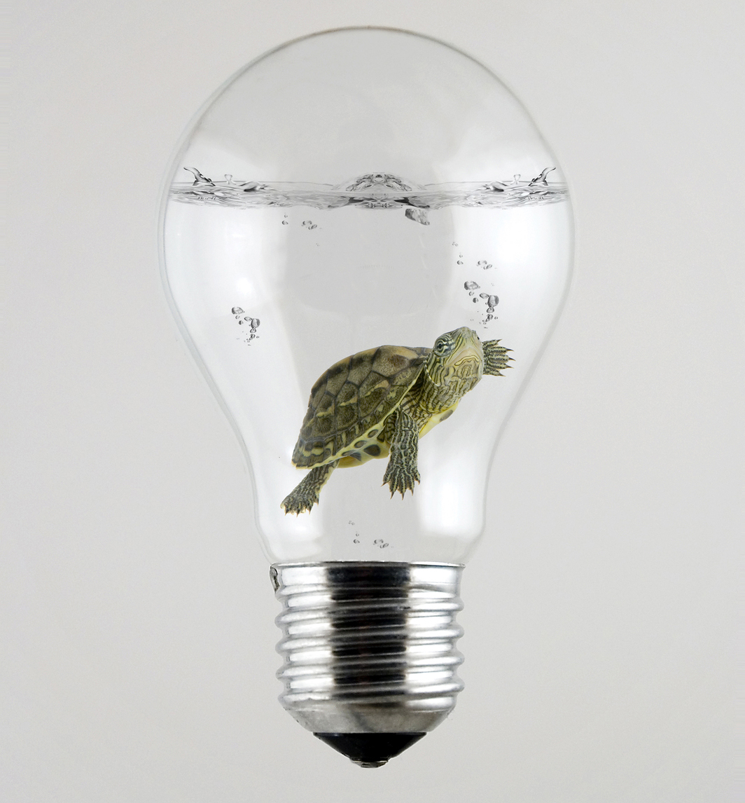 Slower Than a Turtle- The Speed of Electricity