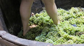 Do Wine Makers Really Walk Over Grapes With Their Feet?