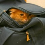 cat-bag-340x226