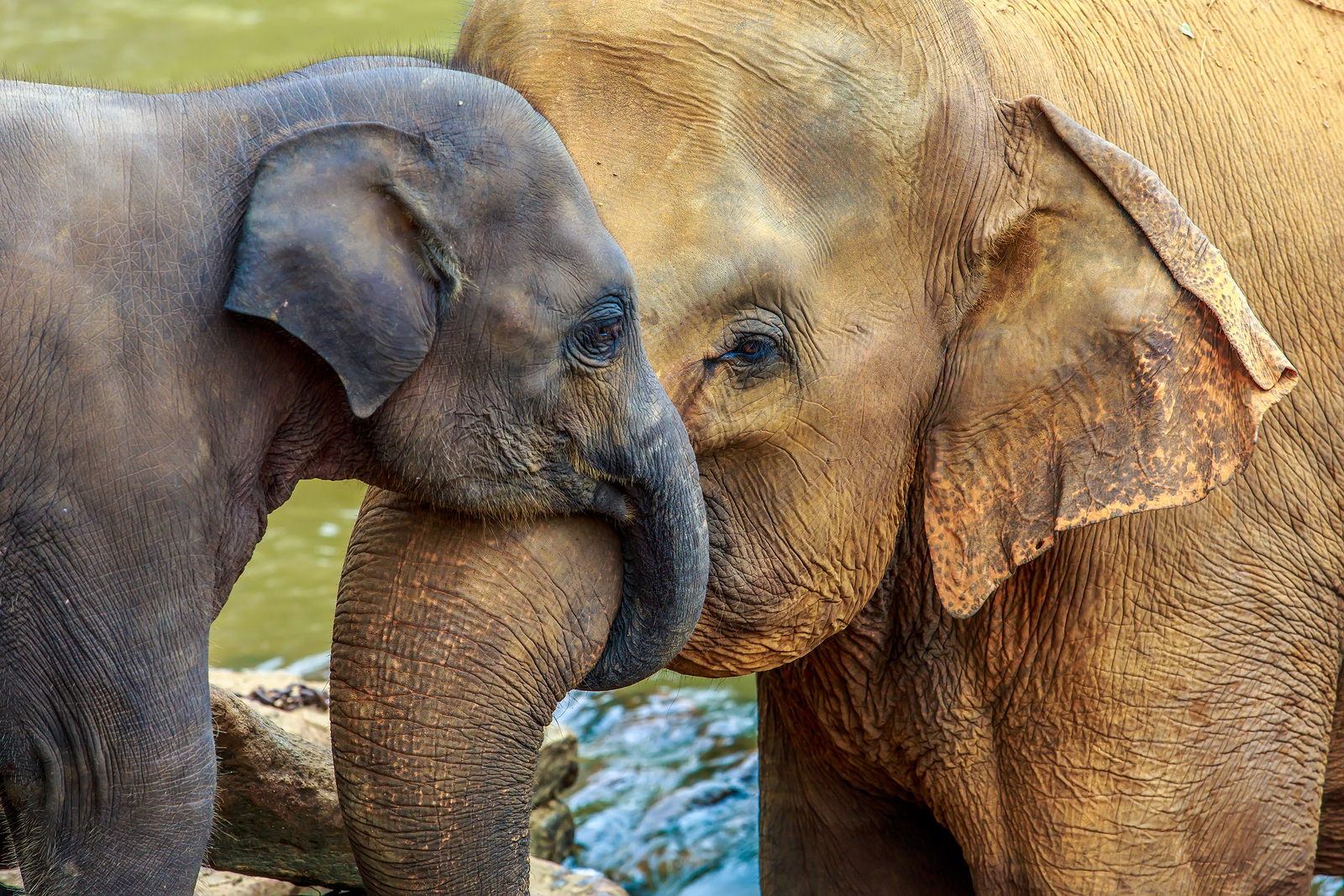 Karl G. asks: Why do we call an elephant?s nose a trunk?