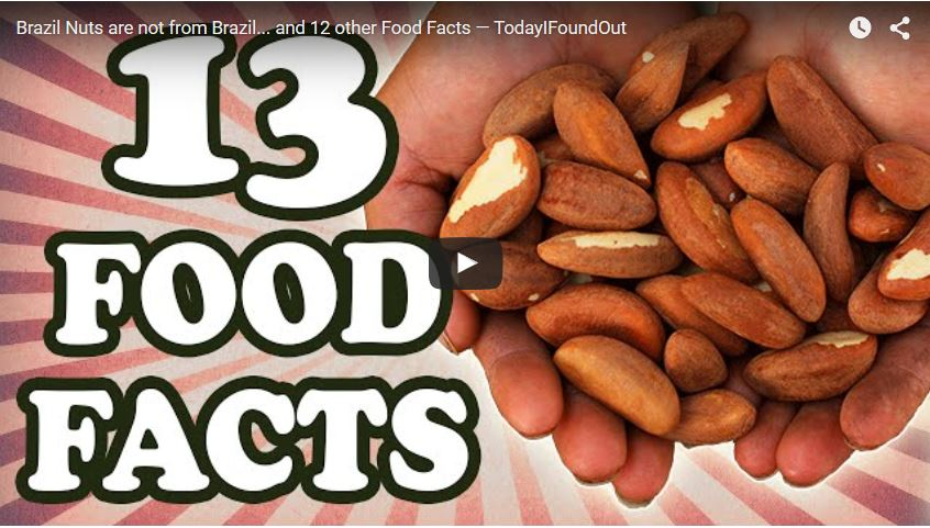 Facts About Nuts For Kids