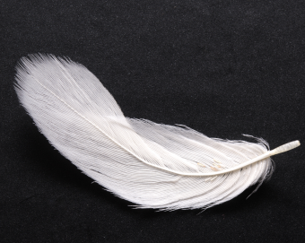 White-feather