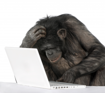 chimp-on-a-laptop