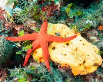 starfish-and-sponge