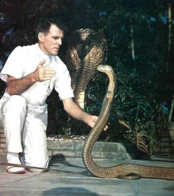 charming-snake