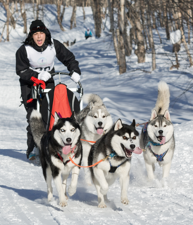 "Why Do They Say ""Mush"" to Make Sled Dogs Go?"