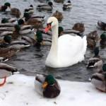birds-in-winter-340x226