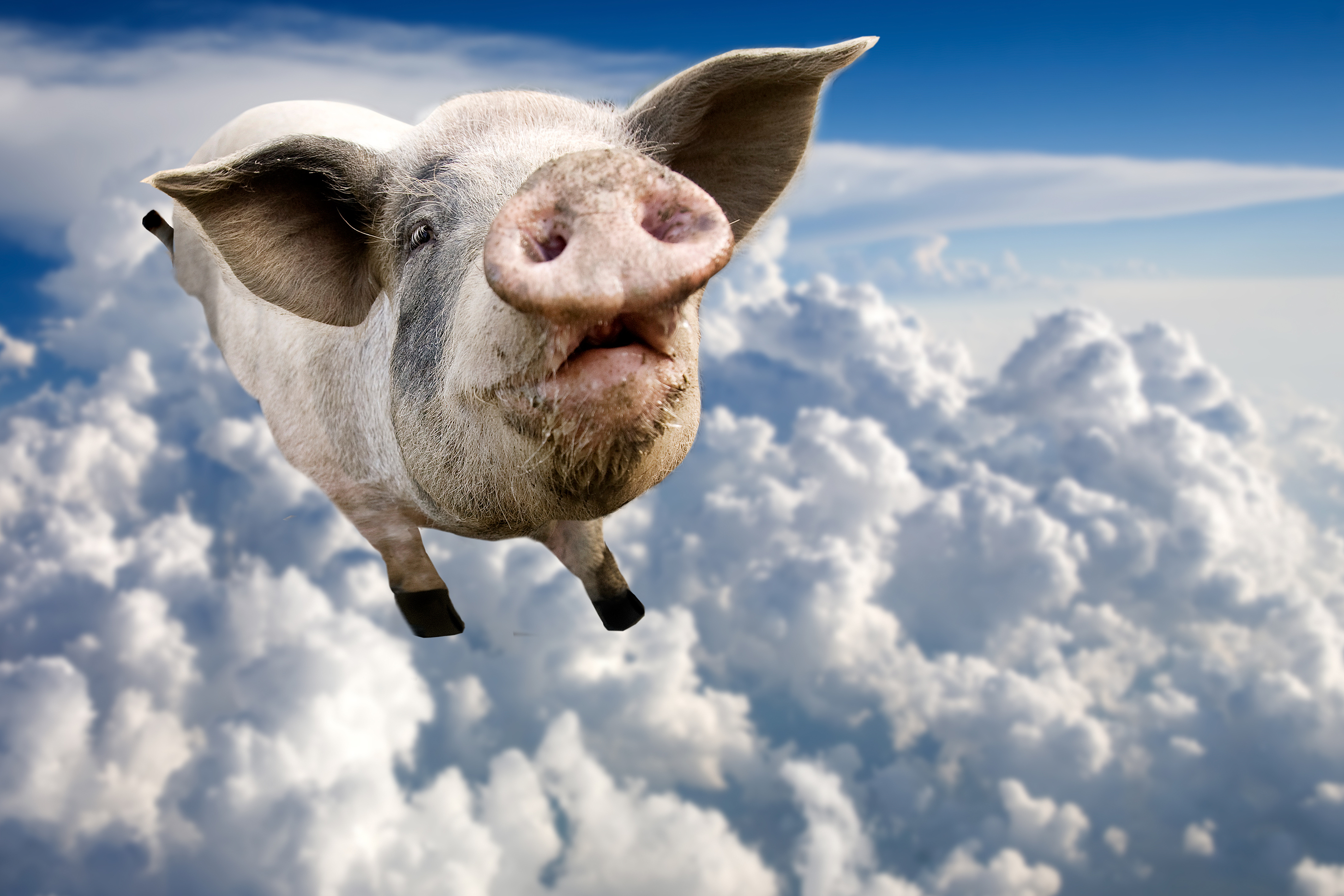 That Time a Flying Pig Grounded Every Plane at London's Heathrow ...