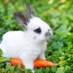 baby-bunny-340x261