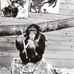 monkey-artist-340x446