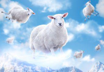 flying-sheep