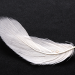 White-feather-340x271