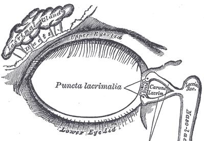 lacrimal-gland