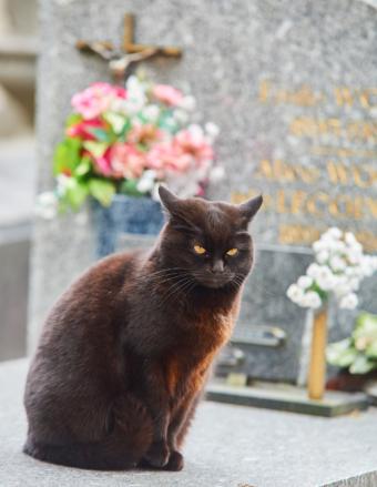 cat-grave