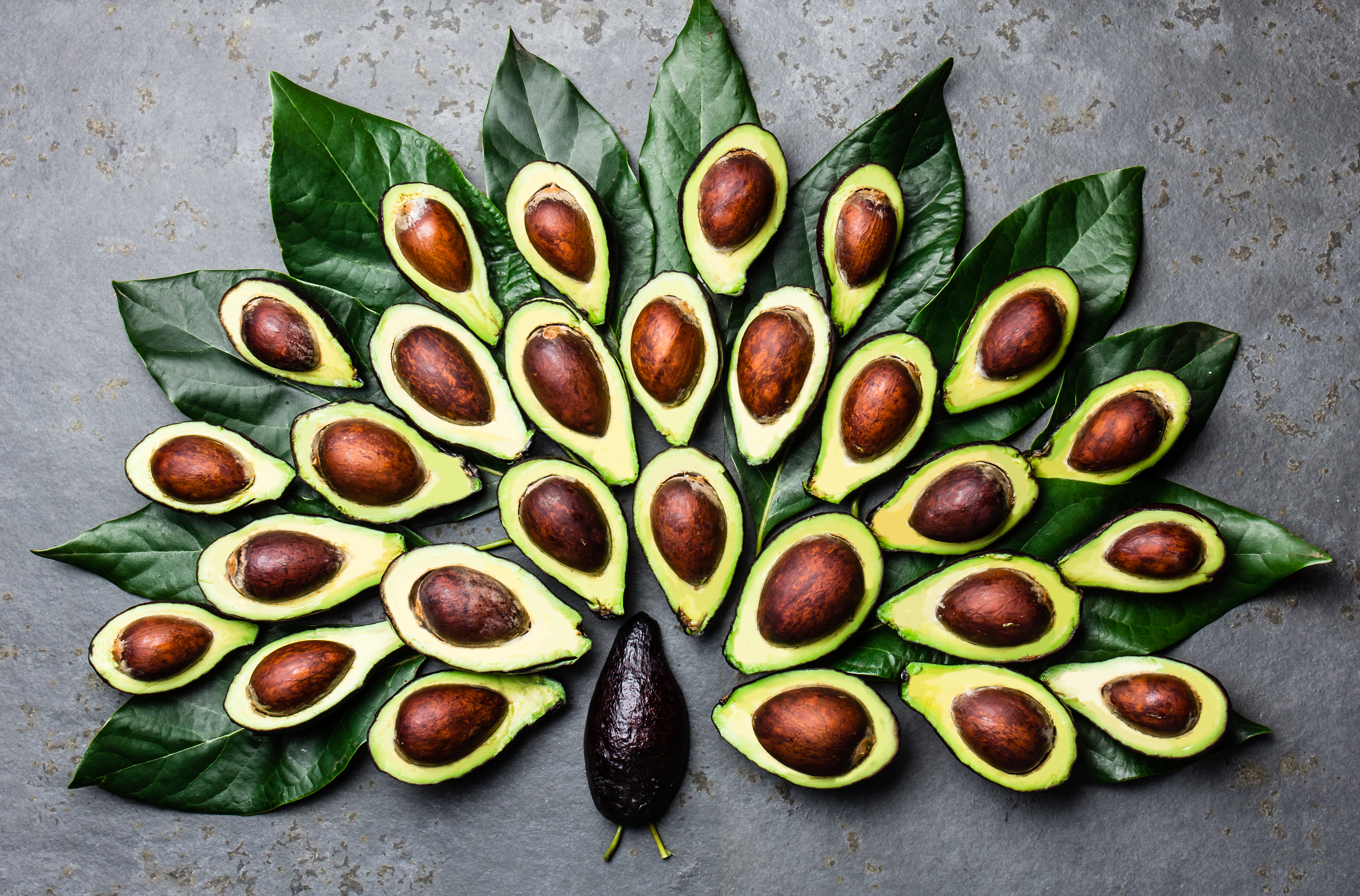 Secrets Of The Avocado