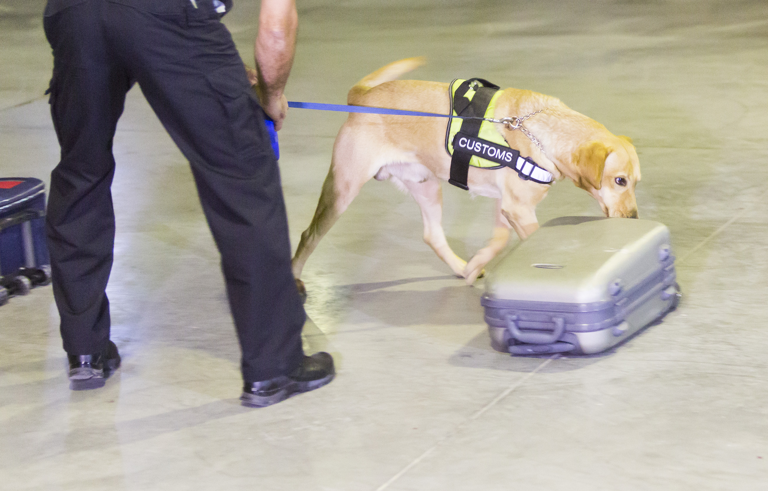 What Are Drug Dogs Trained To Smell