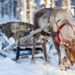 Reindeer-340x227