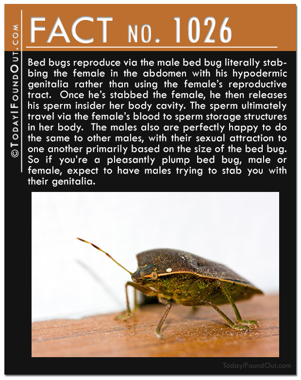 facts infographic interesting ly visual community bed bugs bug