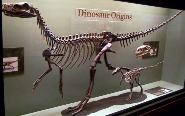 What Did People First Think When They Found Dinosaur Bones?